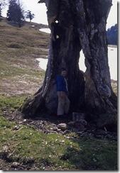 im hohlen Baum